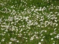 Badanie SWPS: zapach może zwiększać zapał do pracy